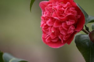 view to camellia outside 4 by ingeline-art