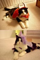 My Cat's Awesome Party by Sugargrl14