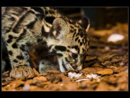 Baby Panther by sekhmet-neseret