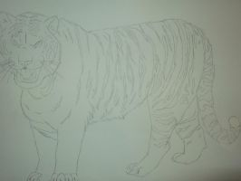 Tiger sketch by Lali-the-Bunny
