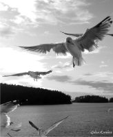 Birds_1 by amphiprora