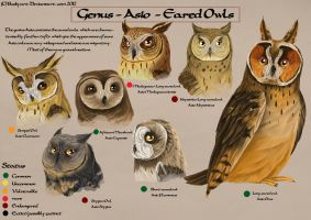 Asio Species chart by busbyart