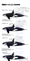 -Killer whale forms- UPDATED by AngelMC18