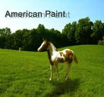 American Paint foal by TallyBaby13