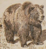 Grizzly Bear Woodburning 02 by MontanaJohnsons