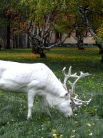 White reindeer by Atzuni