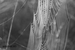 web by psychodelic-candy