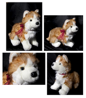 Douglas Medium Floppy Dogs - Rubin Russet Husky by The-Toy-Chest