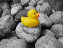 A Duck on the Pebbles by beadtheweed