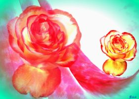 Two roses. by Mladavid