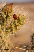 Lady Bug by Milton-Andrews