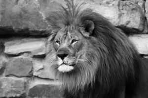 King of the Manes by Dramier