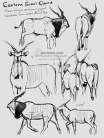 Giant eland studies by namu-the-orca