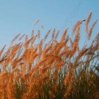 Grasses 1 by TheDevlyn