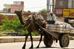 Jaipur transportation 2 by wildplaces