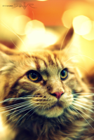 Portrait of the cat by Rynvord