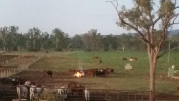 Cattle 'round the fire by LeeV101
