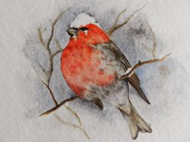 Bullfinch - watercolours by OmbryB