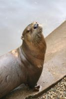 Toronto the Otter by rbryant