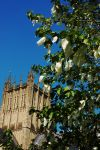 Kerchief Cathedral by EarthHart