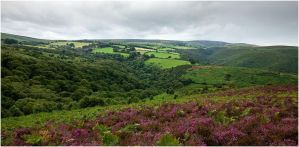 a rainy exmoor summer by sassaputzin
