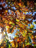Enveloped in Autumn by Qwert10101