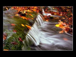 Autumn In Motion by DG-Photo