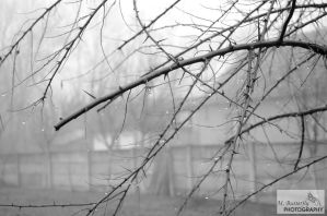 Foggy morning.. by mayu-butterfly