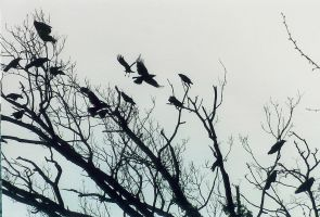 tree of crows by silvercrow