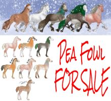 Selling OUT of Pea-Fri by Roma-Roses-Ranch