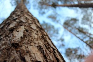 A Trunk Of A Tree by Phy6