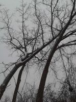 Trees In Winter 2014 by SirDNA109