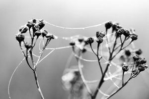 Old lace ii by florapudelkova