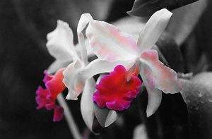 Tintii Orchids by Tailgun2009
