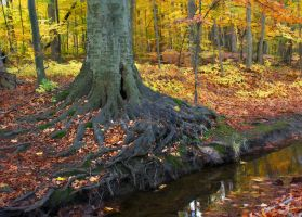 Roots by photorip