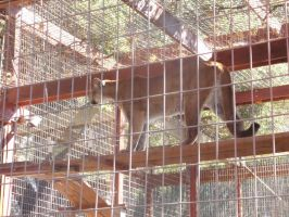 Folsom City Zoo Photo Series12 by lilly-peacecraft