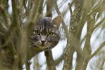 Cat in a tree by attomanen