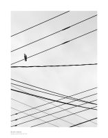 Pigeon and Lines by luiscds