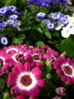 Pink Flowers Unres stock 01 by shelldevil
