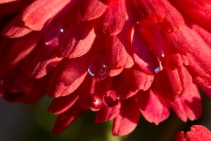 water drops(2) by pringle753