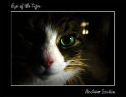 Eye of the Tiger by OnlyAppearStupid