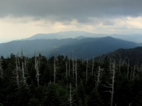 Great Smoky Mountains National Park by jaredks