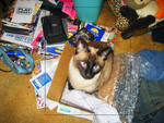 Siamese in the Box by Selenebell59