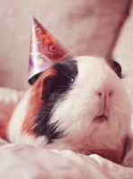 B-Day by Guineapigrage