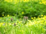 Close Up of a Meadow by GianniMiquini