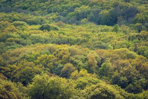 Forest from Above III by Freggoboy
