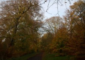Autumn in Ormeau 1 by akseiya