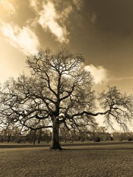 Priory Park St.Neots by davepphotographer