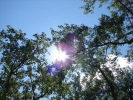 Lens Flare Trees in the Sky by FantasyStock