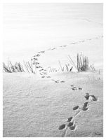 footprints in the snow BW by Niophee